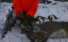 Wisconsin Hunting season kicks off