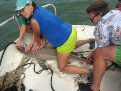 Biology students tag sharks and study ecosystems in Florida