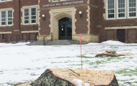 Campus tree removal known to some, surprise to others