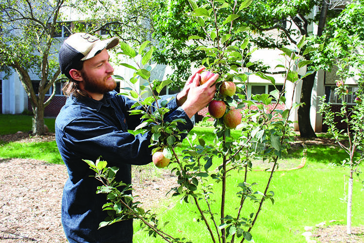 Foodlums President Miles Hegg said one of his favorite parts of running a community garden is enjoying the fruits of his labor, literally here with the apple crop in the Phillips Science Hall garden.