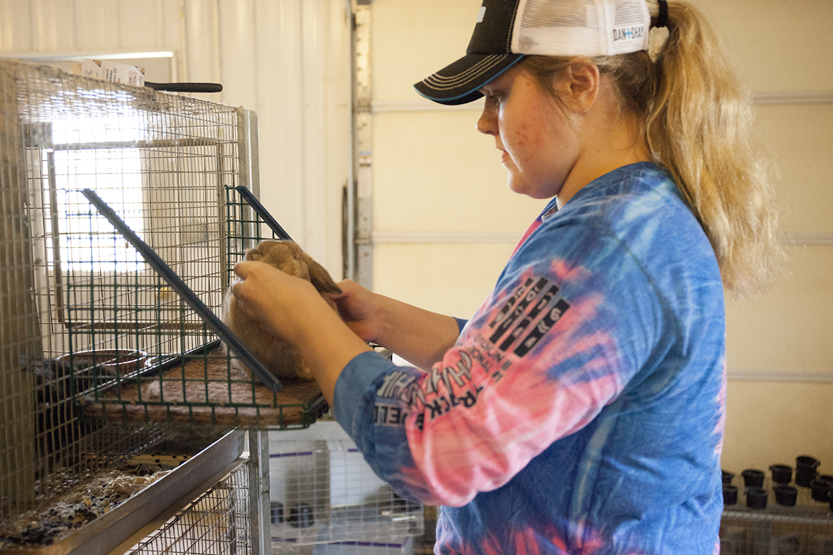 Taylor Deling, a sophomore education student, owns over 100 rabbits which she shows at the national level.