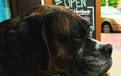 Tangled Up In Hue celebrates shop dog's retirement with fifth annual Dog Art Show