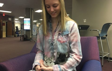 UW-Eau Claire student is the sole owner of a growing chinchilla breeding business