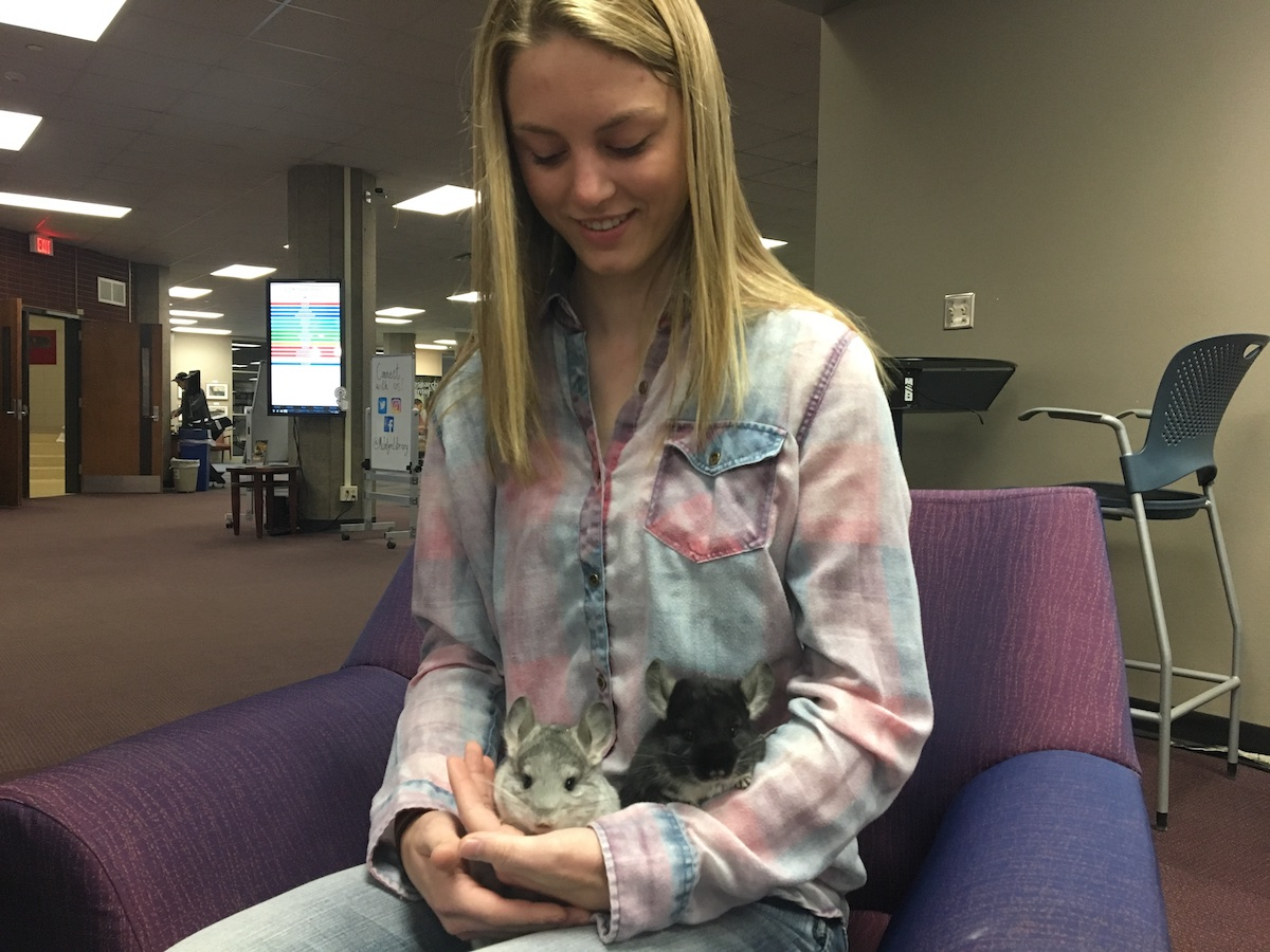 Bobbie Schultz said she hopes running Bobbie's Chinchillas is what she does as a career, and is excited to see where her business can go.