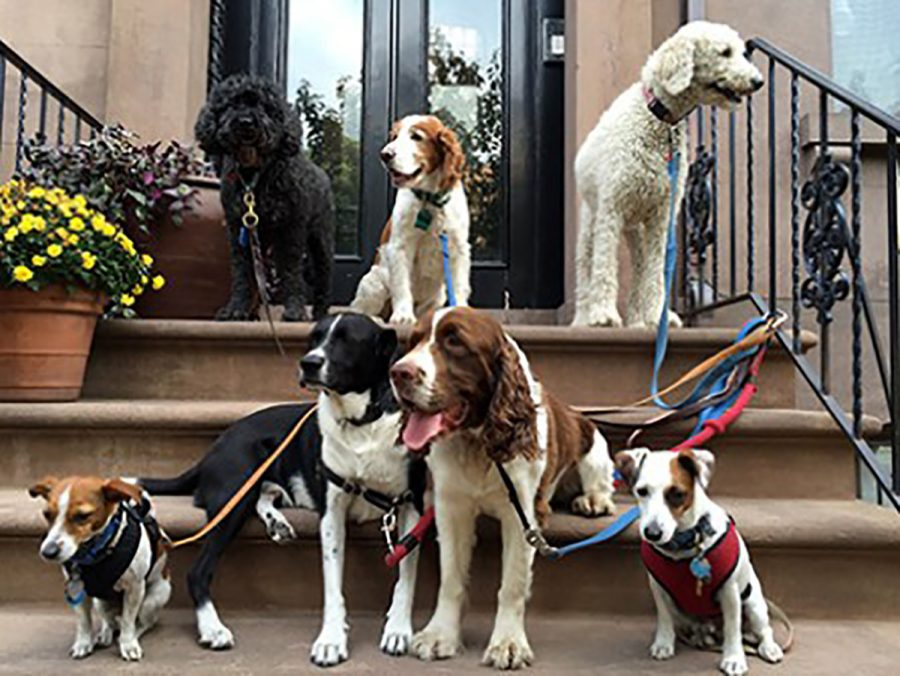 Keeping dogs on leashes in crowds is a good way to respect others' boundaries without having to leave your puppy at home.