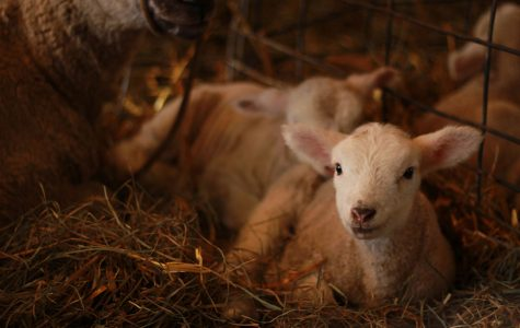 Govin's Farm welcomes visitors as spring brings new life to Wisconsin