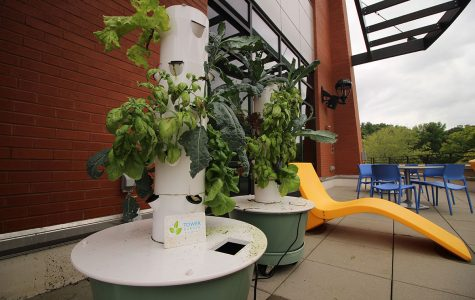 Student Office of Sustainability strives to make students conscious of their impact on the environment with new Tower Gardens