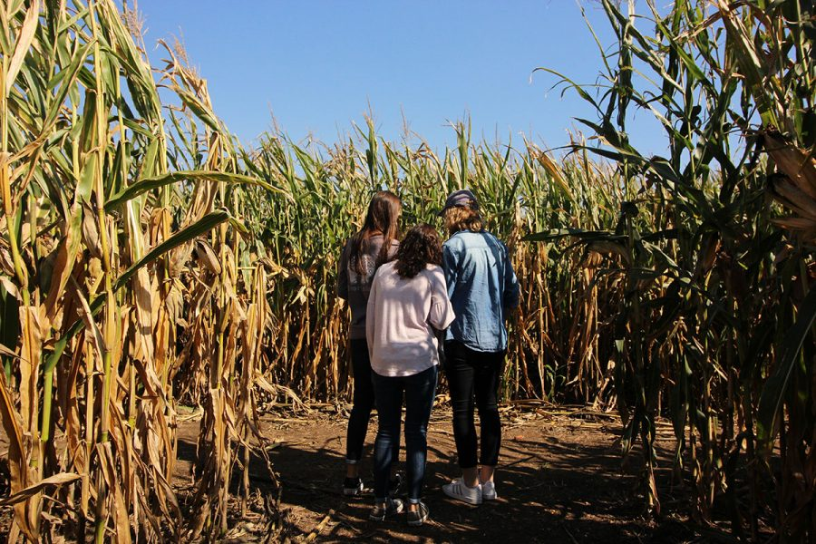 Govin%27s+farm+boasts+a+variety+of+fall+activities%2C+but+the+main+attraction+is+its+corn+maze.+