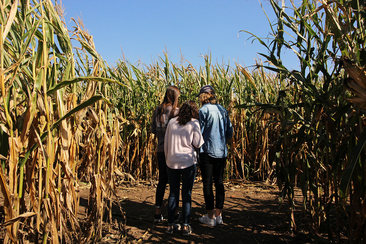 Govin's farm boasts a variety of fall activities, but the main attraction is its corn maze.