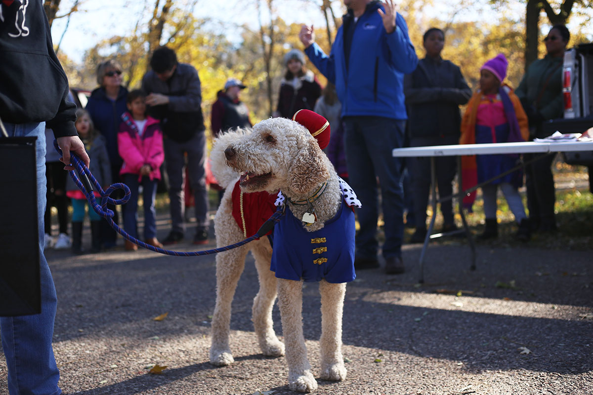Nelson+the+Doodle+won+first+place+in+the+best+individual+category+for+the+second+year+in+a+row+due+to+his+%E2%80%9CPrince+Hairy%E2%80%9D+costume.