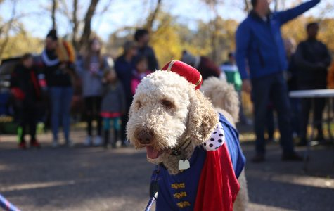 "Nelson the Doodle showcased his ""Prince Hairy"" costume."
