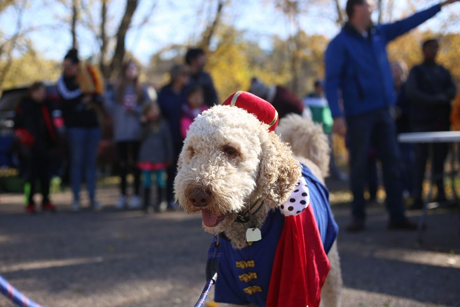 Nelson+the+Doodle+showcased+his+%E2%80%9CPrince+Hairy%E2%80%9D+costume.