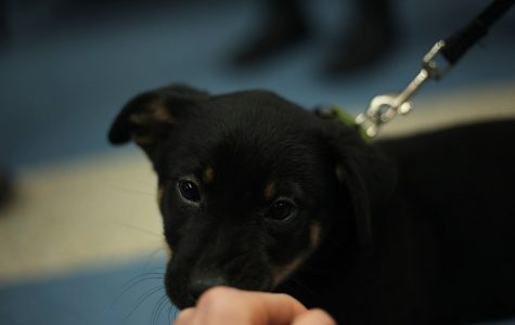 """Books and 'Beasts'"" event brings puppies and bunnies to local library"