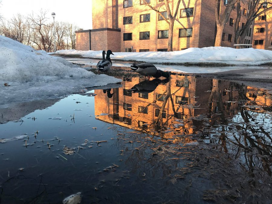 While some flooding has occurred, and evidence of it is clear on UW-Eau Claire's upper campus (pictured above), the river levels haven't yet risen as high as originally feared.