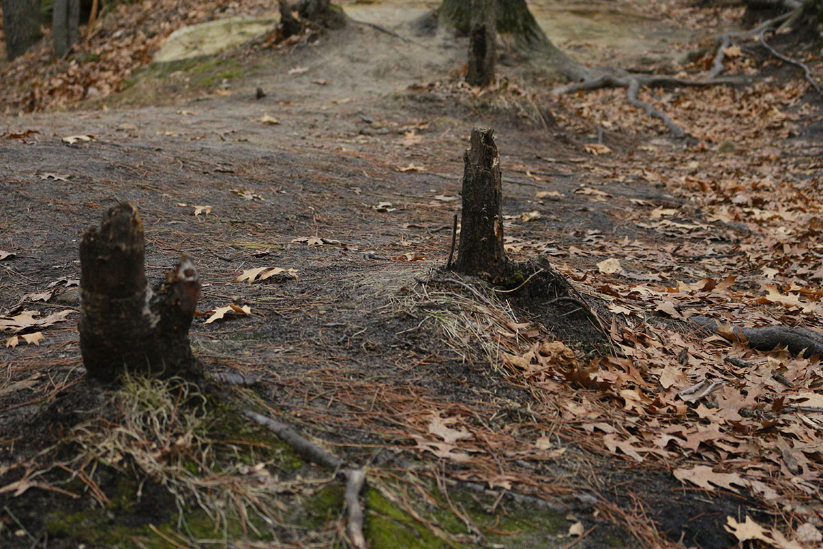 A+well-worn+path+proved+too+strong+for+these+trees.