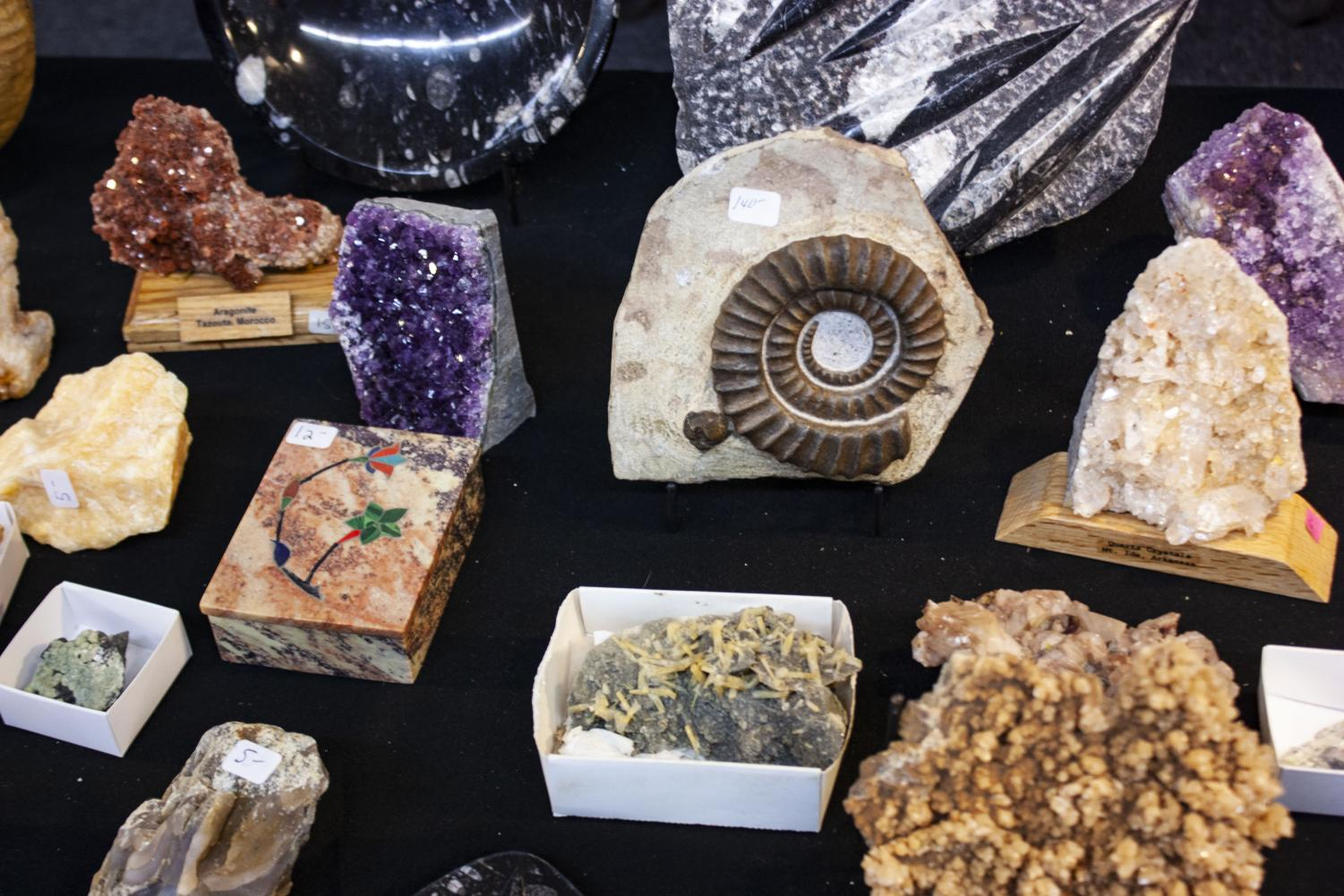 A+fossilized+spiral+shell%2C+known+as+an+ammonite%2C+is+shown+among+an+array+of+other+stones.+