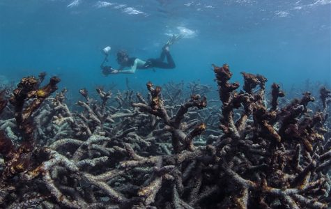 If we don't do something soon about climate change, the beautiful coral reefs of the ocean face extinction.