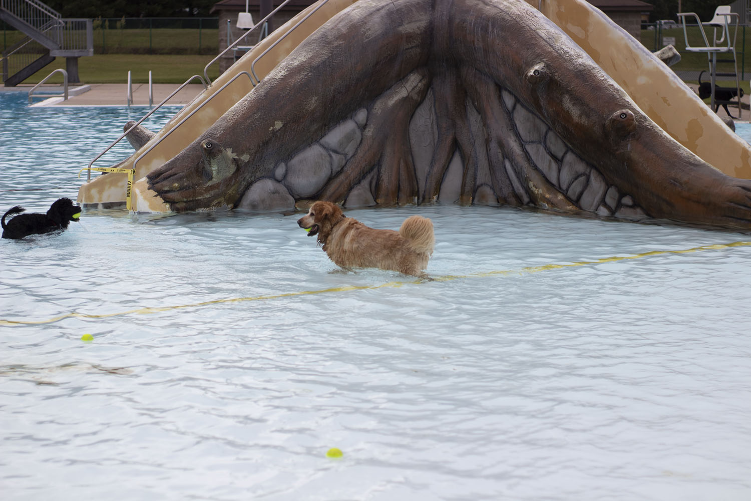 Sam%2C+the+golden+retriever%2C+wanders+aimlessly+and+takes+in+the+cool+water.