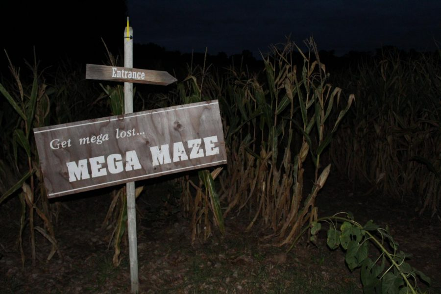 Leffel Roots offers an after dark version of their corn maze from 7 to 10 p.m. on Friday and Saturday nights.