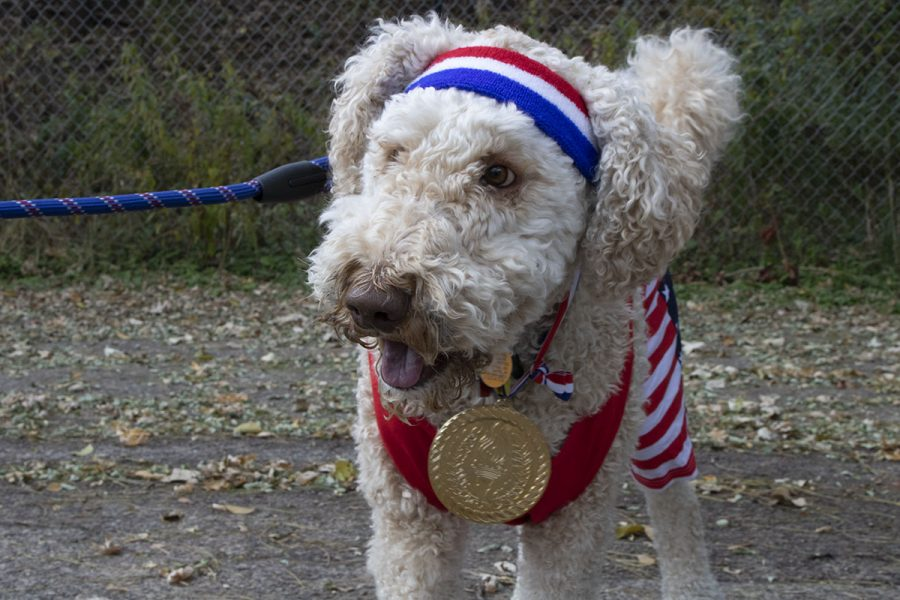 Nelson+the+Doodle+poses+in+his+Olympian+costume.