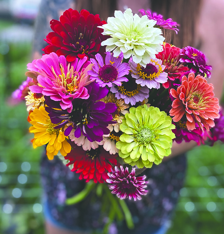 Fresh+flowers+are+enough+to+brighten+anyone%27s+home%2C+especially+if+those+flowers+are+locally+sourced.