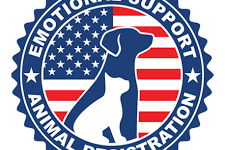 The support of a dog or cat. The reward of having an emotional support animal