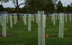 Three plots of land were planted with trees on Bolinger Fields as a part of a transnational garden study.