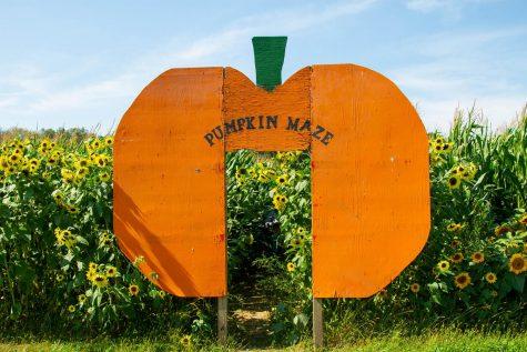 The pumpkin patch offers a walk-through pumpkin maze that begins in a sunflower field.