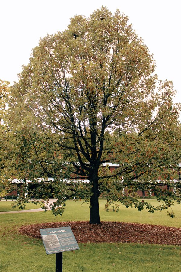 Visit the Council Oak tree outside of the Nursing building on lower campus to see the ceremonial site for the Ojibwe and Ho-chunk tribes.